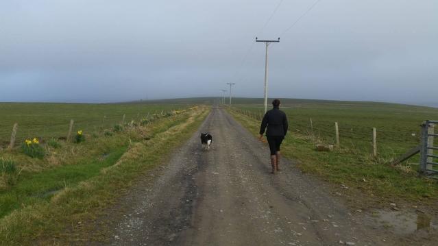 Core paths dog walking