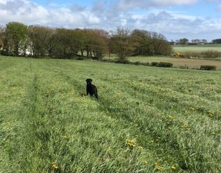 for readers in Sanday this is grass (A Ross)