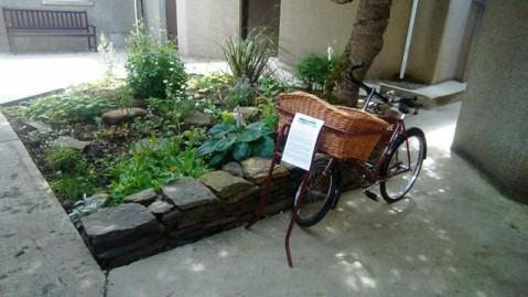 Kirkwall's Pocket Garden (N Morrison)