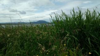 wildflowers at Brodgar