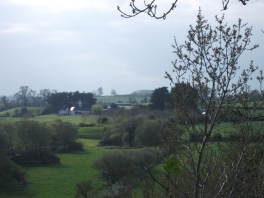 Newgrange through the trees