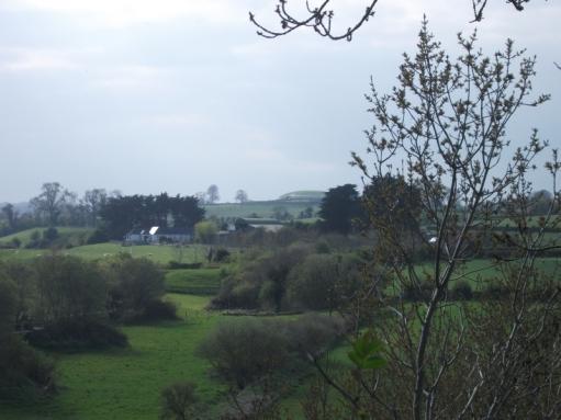 Newgrange through the trees