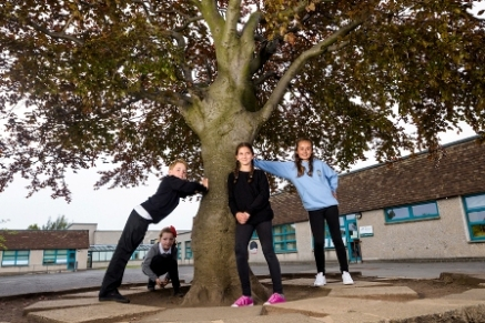 The Ding Dong Tree –Prestonpans Primary School, Scottish Tree of the Year 2016 . Credit Niall Benvie