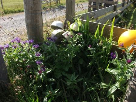 gardening 4 B Bell