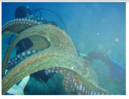 Octopus E Keyes