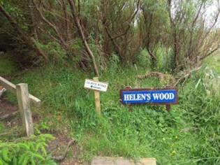 Olavs Wood 1