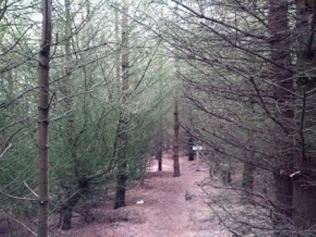 Olavs Wood 2