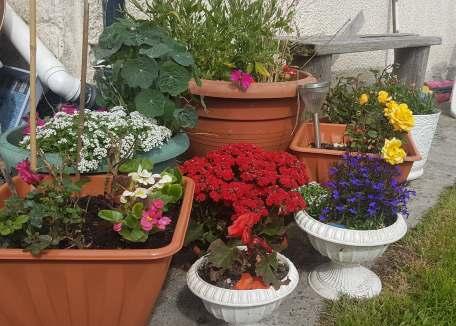 Helen's Flower pots