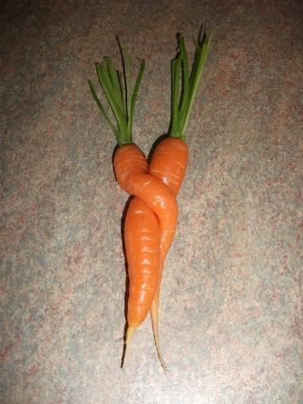 carrots Bernie Bell