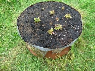 gardening 16 planting 2 FG