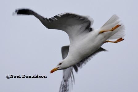 In flight bird 1
