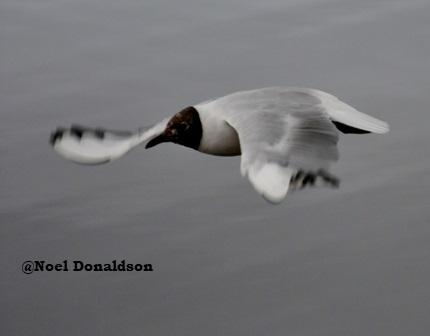 In flight bird 2