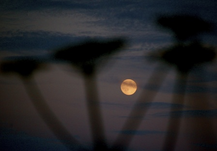 Moon by Fiona Driver 1