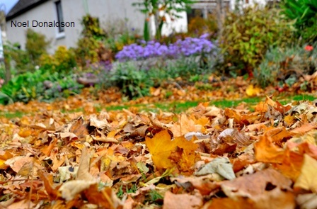 Autumn Linlithow