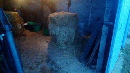 Farm 7 Nick