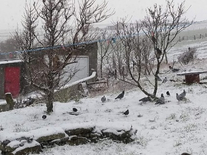 birds being fed in the snow