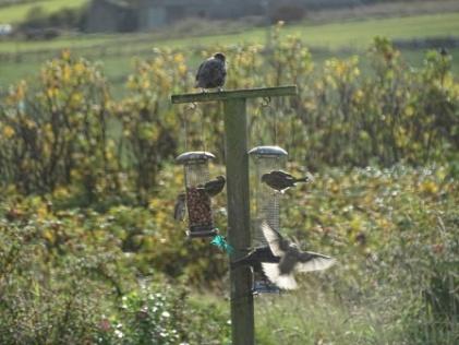 bird feeder B Bell