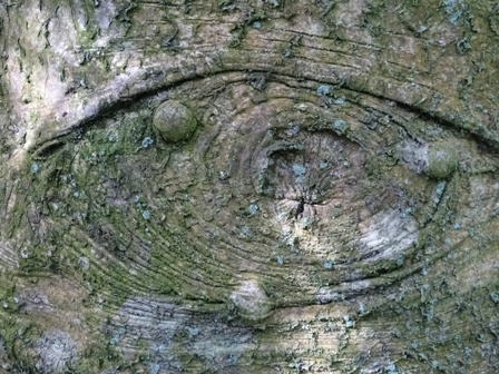 Tree bark Woodwick 2 M Bell