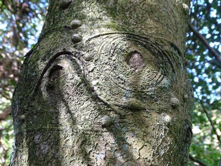 Tree bark Woodwick 4 M Bell