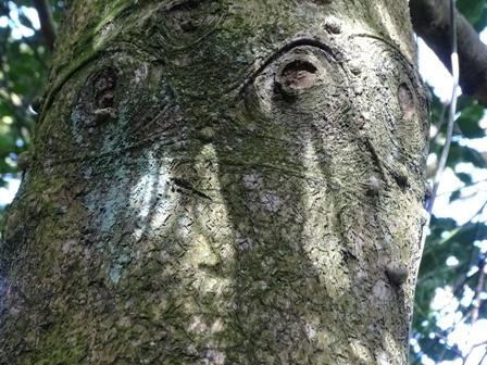 Tree bark Woodwick M Bell
