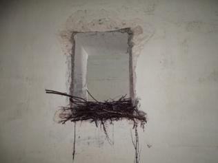 Hoxa Head 11 birds nest