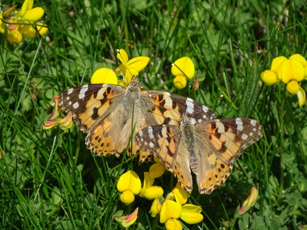 Marwick painted Lady butterlies Bell