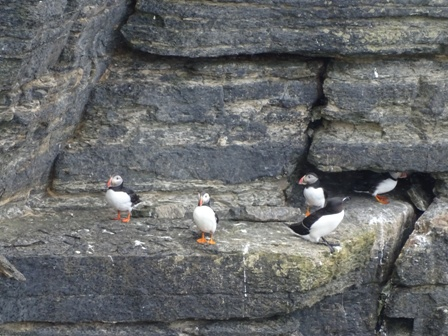 Marwick puffins Bell 1