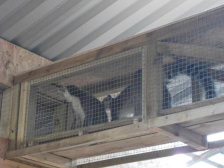 lemurs 6 Bell