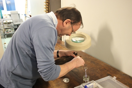 Photo:Alexander Lees  Tony Parker assistant curator of vertebrate zoology at Liverpool World Museum taking a toe pad sample for DNA analysis