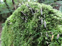 Binscarth Woods Autumn fungi Bell