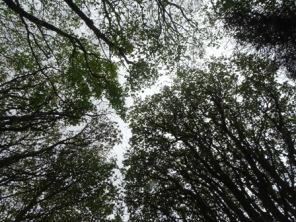 Binscarth woods autumn trees Bell