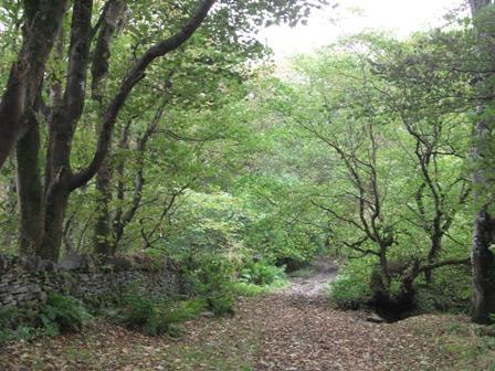 Binscarth Woods Autumn Bell