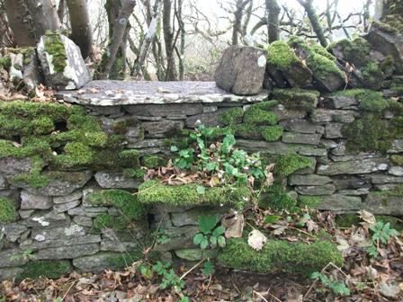 Binscarth Woods Autumn purslane Bell