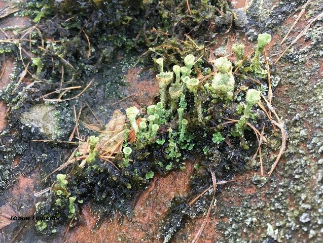 Fungus in Woodland by Rosie Hopkins
