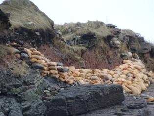 coastal erosion Newark Bell