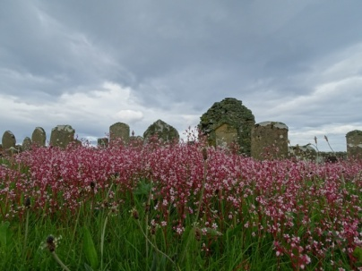 cemetery with wild flowers Bell