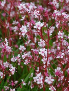 wild flowers Bell