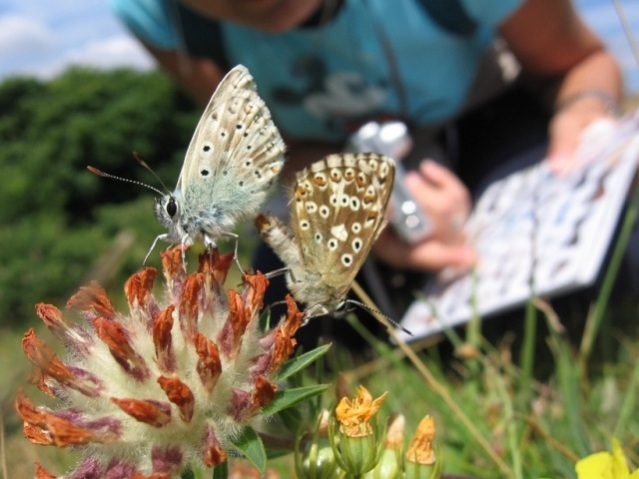 Butterfly recording 2crd Butterfly Conservation