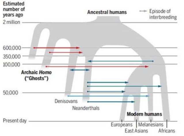 A 'state-of-play' view of human interbreeding in Eurasia since 2 Ma ago (credit: Gibbons 2020)