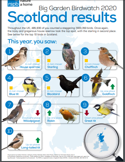 Big Garden Birdwatch 2020 Scotland