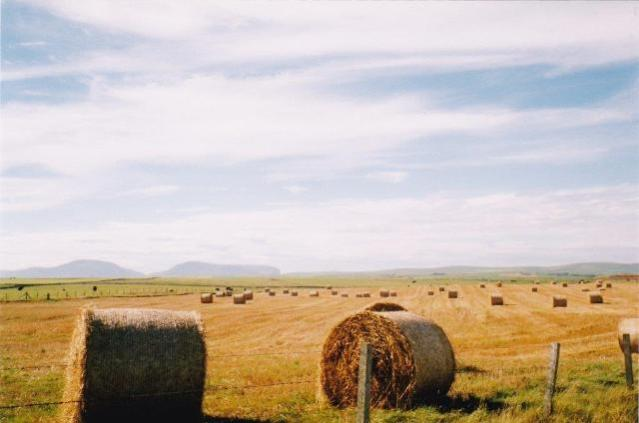 Harvest field in Orkney with view over to Hoy, Bell