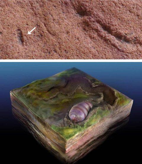 fossil early bilaterian Steve Drury