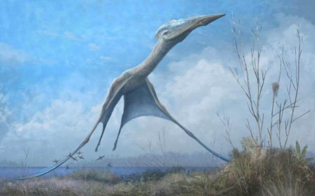Reconstruction of the giant pterosaur Hatzegopteryx launching into the air, just after the forelimbs have left the ground (credit: Mark Witton)