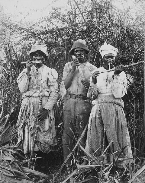Cane cutters in Jamaica 1880
