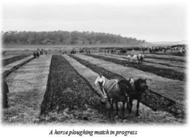 A horse ploughing match in progress Ian Cooper Stronsay Limpet