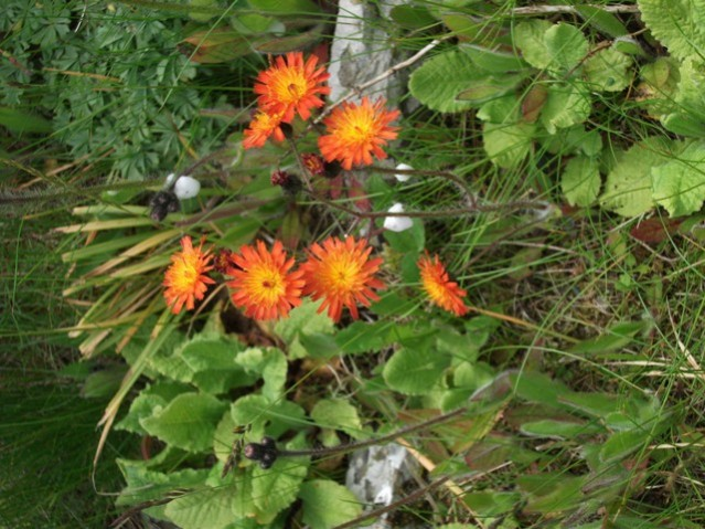 flower in garden credit Bell
